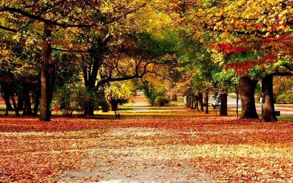 van ta canh mua thu - Văn tả khung cảnh mùa thu