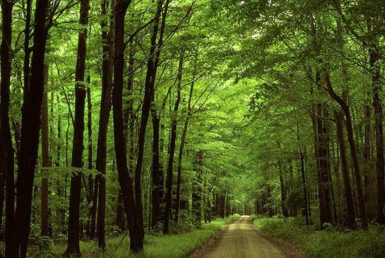 Soạn rừng xà nu phần đọc hiểu tác phẩm- CungHocVui